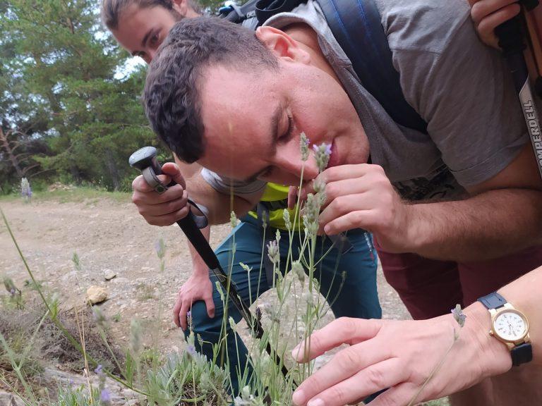 A l'imatge podem observar una persona cega olorant i tocant espigol