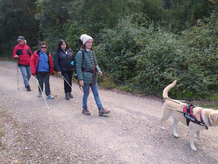 A l'imatge es veu un grup de quatre persones cegues, una d'elles amb gos pigall i dues altres amb bastons, caminant per una pista forestal.
