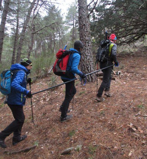 tres persones amb barra direccional caminant per un bosc